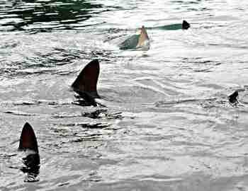 статистика нападений акул