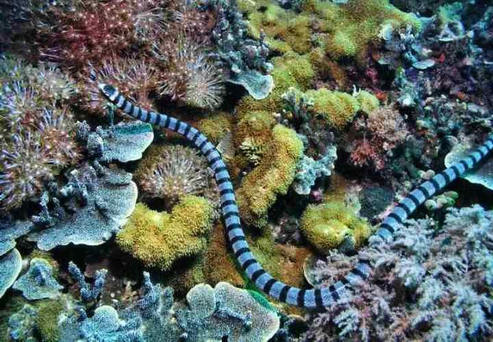 убила морская змея
