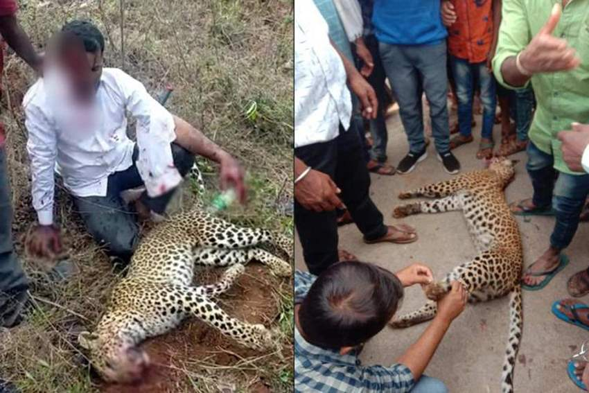 Карнатака нападение леопарда