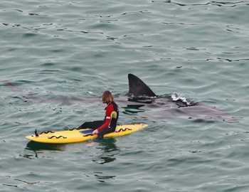 вторая смерть от акулы в Австралии
