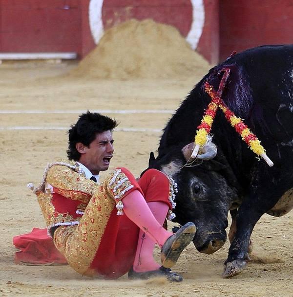 Виктор Баррио и бык
