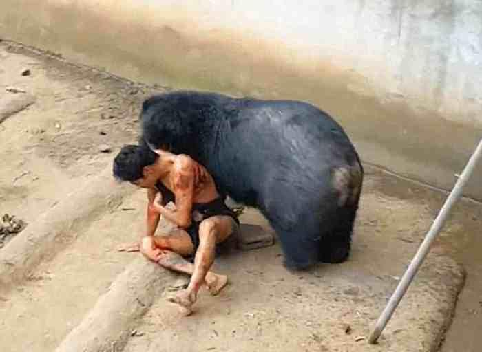 медведь держит в зубах мужчину