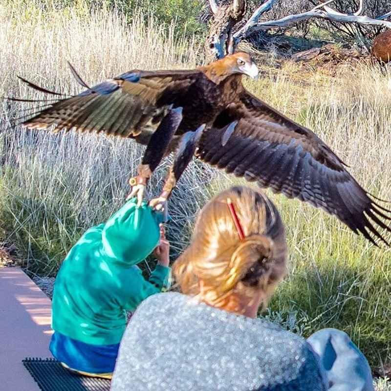 орел напал на ребенка