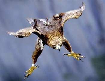 орел спикировал на мальчика