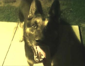 собака по кличке Тор