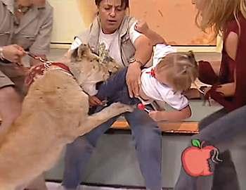 лев в прямом эфире напал на ребенка