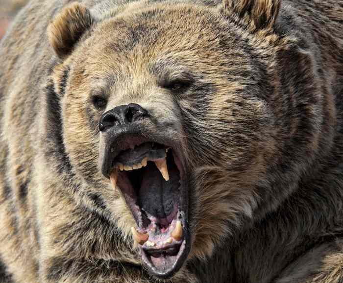смертельный медведь
