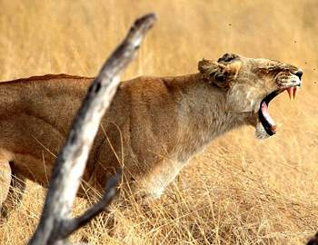 смертельные животные в Африке