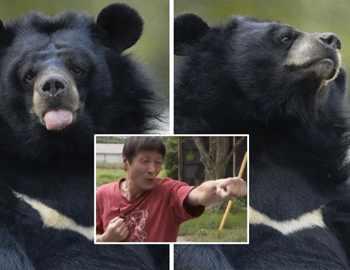 японец избавился от медведя карате