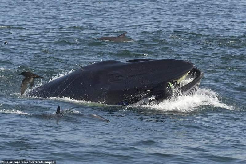 кит заглотнул человека