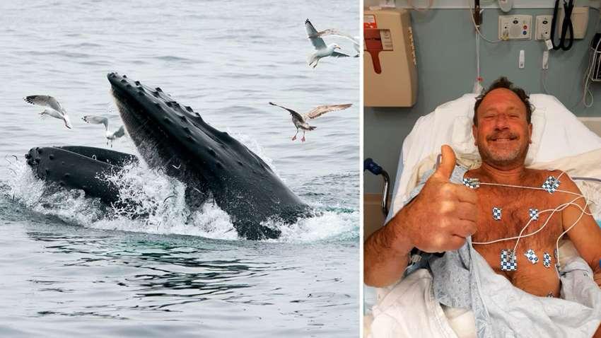 американца проглотил кит