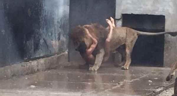 мужчина вцепился во льва