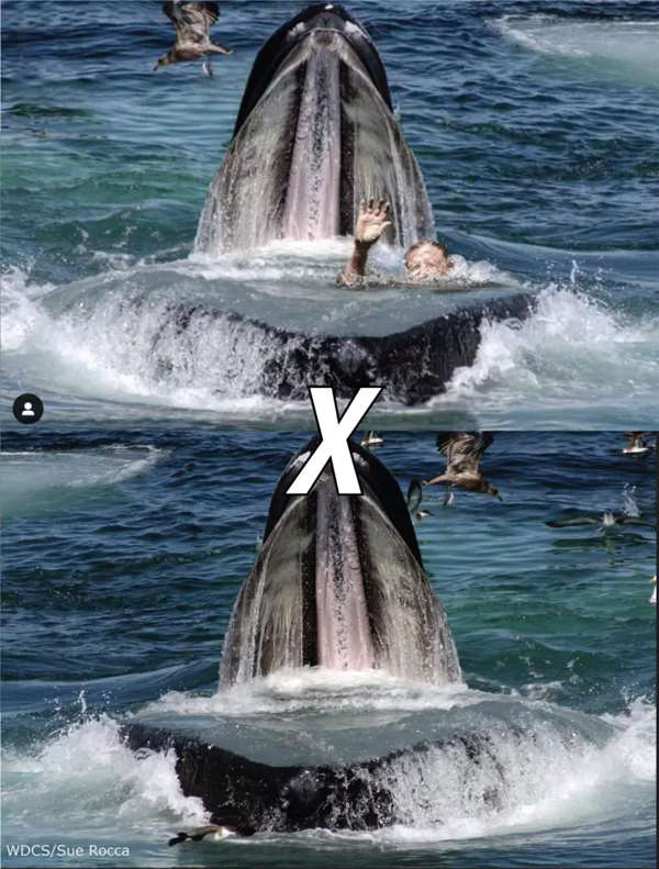 фальшивка с китом