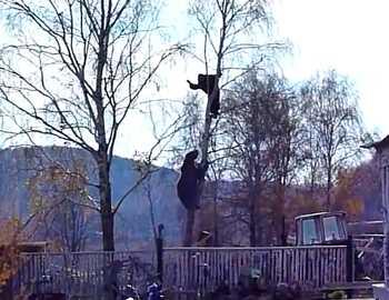 мужчина залез от медведя на дерево