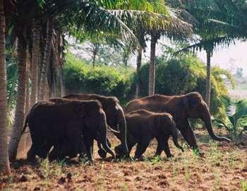 слоны вышли из леса