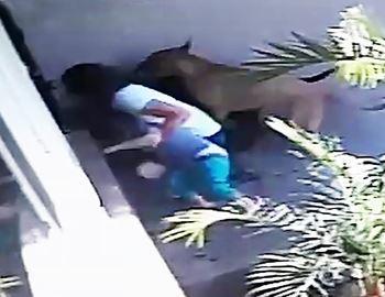 женщина защищает своего ребенка от двух собак