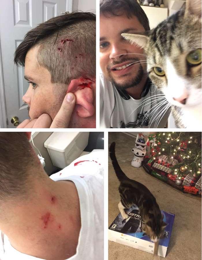 нападение кота на Новый Год