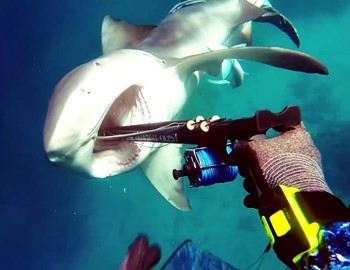 гарпун в рот акуле