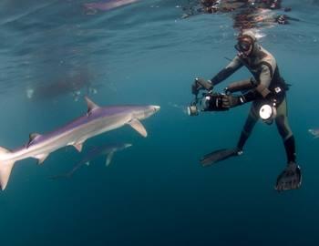 голубая акула и дайвер