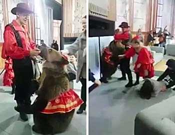 медведь напал на женщину