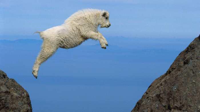 прыгнул горный козел