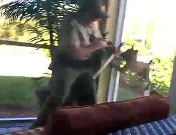 рысь нападает на человека