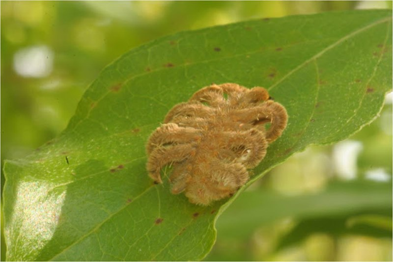 ползет гусеница