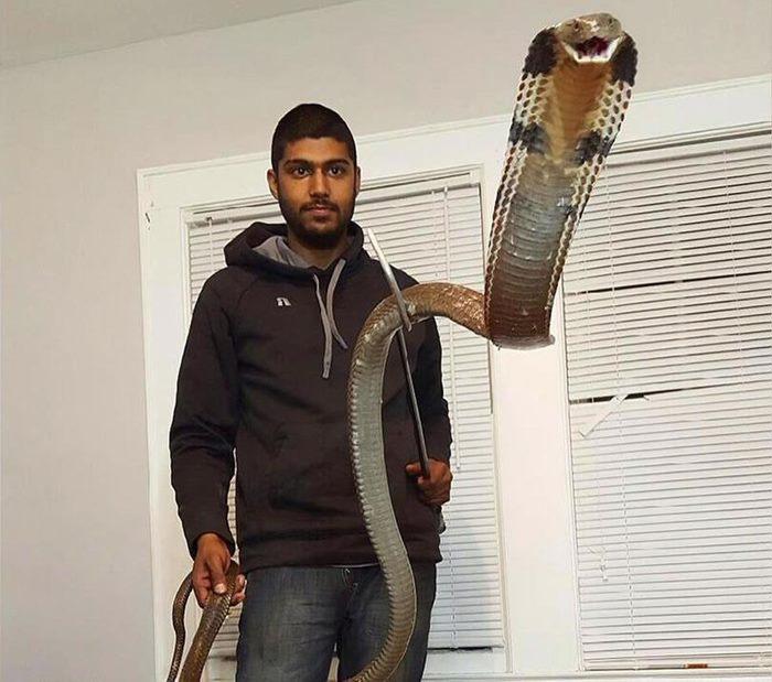 парня укусила королевская кобра