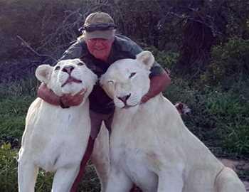 фото с белыми львами