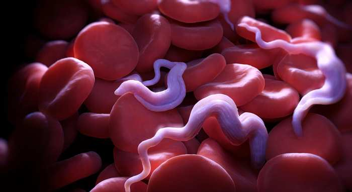 паразитсонной болезни