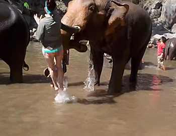 слон ударил студентку