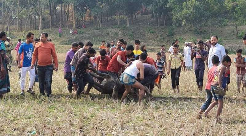 разъяренная толпа убила буйвола