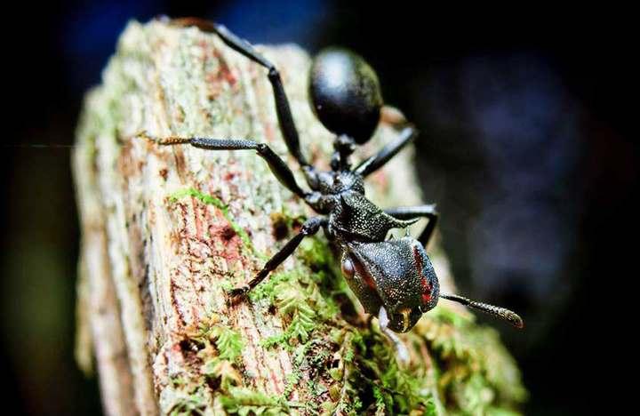 самый сильный укус среди насекомых