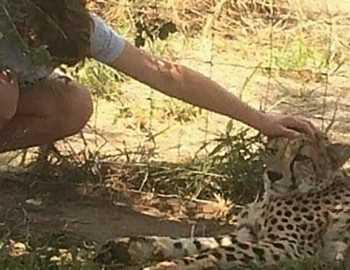 на мальчика набросился гепард