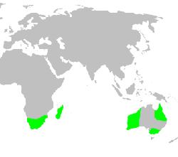карта обитания пауков-пеликанов