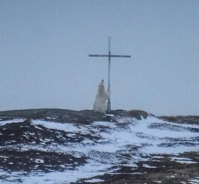 медведь лезет на крест