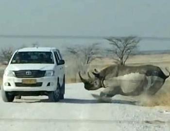 носорог нпал на машину