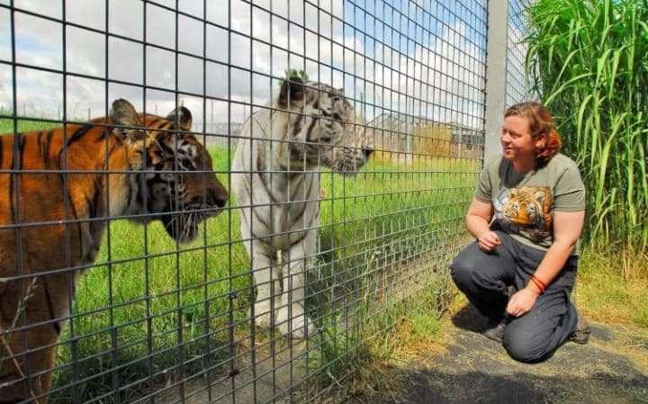 британка с тиграми