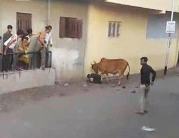 корова возле мужчины