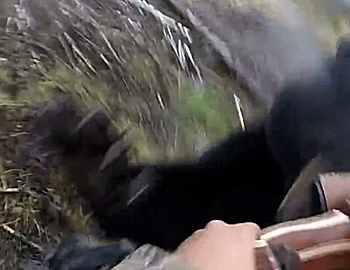 нападение черного медведя в Канаде