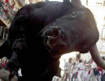нападение злого быка