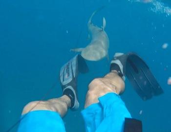 акула плывет к мужчине