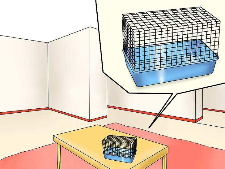 клетка на столе