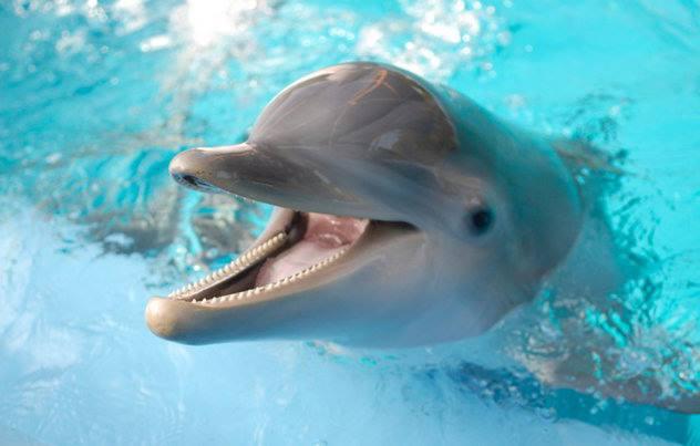 радуется дельфин