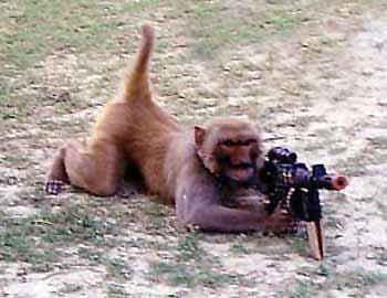 обезьяна убийца