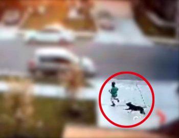 собака бежит за мальчиком