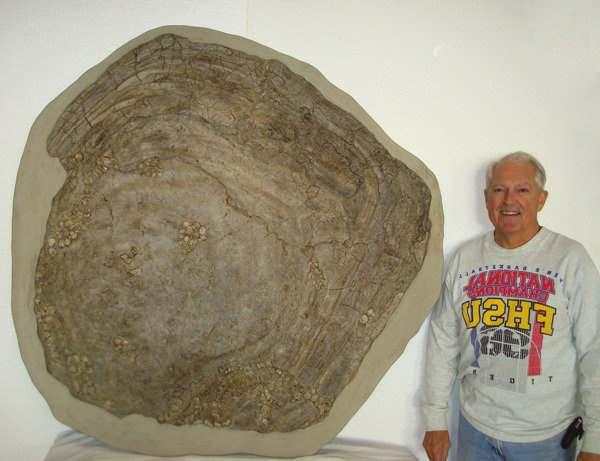 крупный молюск