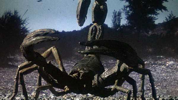 сухопутный скорпион