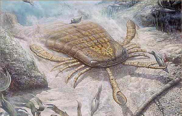 гигантский морской скорпион