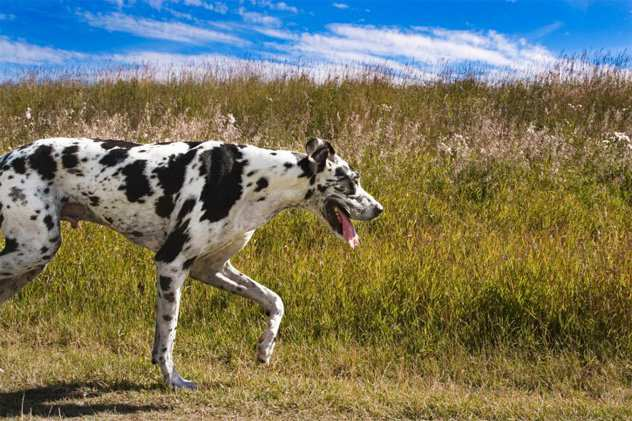 собаки напали на ферму